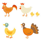 Farm birds Stock Images