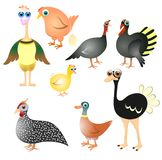 Farm birds collection royalty free illustration