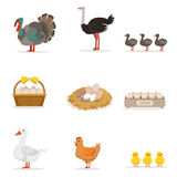 Farm Birds Grown For Meat and For Laying Eggs, Organic Farming Set Of Vector Illustrations With Animals stock illustration
