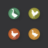 Farm birds silhouette. Animals Livestock button. Royalty Free Stock Images