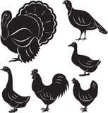 Farm birds. Vector set of different monochromatic birds farm Royalty Free Stock Image