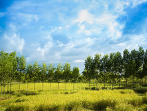 Farm with blue sky and clouds. Wallpaper Royalty Free Stock Photography