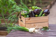 Fresh vegetables in crate in a greenhouse. Organic farm. royalty free stock photography