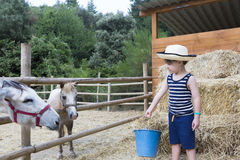 Farm boy feeding animals Stock Photo