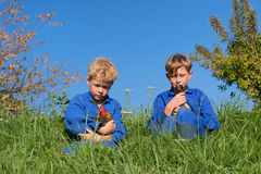 Farm Boys with chickens. Farm boys sitting in grass with chickens stock image