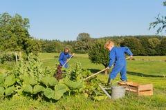 Farm Boys helping in vegetable garden. Farm boys working in the vegetable garden royalty free stock photography