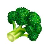 Farm broccoli icon, isometric style vector illustration