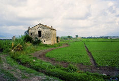 Farm Building and Fields, Italy Stock Photography