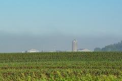 Farm Buildings in Fog stock photography