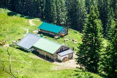 Farm buildings with livestock. Aerial view of rustic farm buildings with livestock in lush green fields surrounded by forest trees Royalty Free Stock Photos