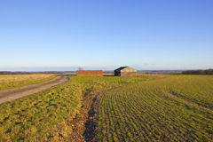 Farm buildings and wheat Royalty Free Stock Photography