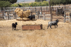 Farm bullring in Seville, Spain Stock Images