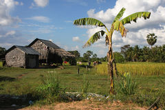 Farm in Cambodia Stock Images