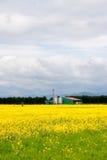 Farm in canola field Royalty Free Stock Image