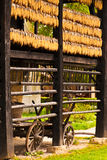 Farm cart and rows of corn. Drying under roof of rustic house Royalty Free Stock Photo
