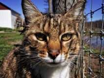 Farm Cat. A close-up image of a cat with the sun and shadows on its face sitting by a fence with a farm building and pond in the background Stock Image