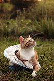 Farm cat in a hat Royalty Free Stock Photo
