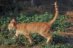 Farm Cat Stock Image