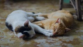 Farm cats sleeping on the farmhouse porch resting after the night prey Royalty Free Stock Photos