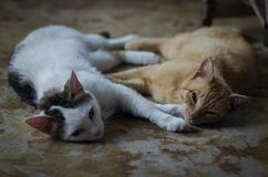 Farm cats sleeping on the farmhouse porch resting after the night prey Royalty Free Stock Image