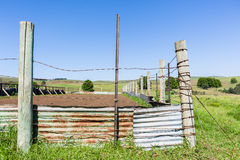 Farm Cattle Animal Corral Pen Stock Photography