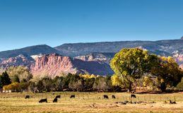 Farm with cattle in Torrey, Utah. US stock photography