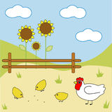 Farm chicken Royalty Free Stock Image