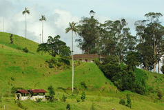 Farm in the Cocora Valley (Colombia) Stock Photography
