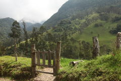 The farm in colombia. The farm and trees  in salento, colombia Stock Images