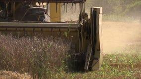Farm combine harvester cut ripe wheat grain stock video