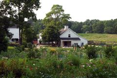 Farm and Community Gardens. Community flower gardens with barns in the background stock photos