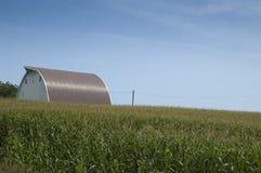 Farm on Corn Field Stock Photography