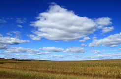 Farm and Corn. Farm in Inner Mongolia of china Stock Photo