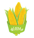 Farm corn Stock Images