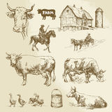 Farm, cow, agriculture. Hand drawn collection Royalty Free Stock Photo