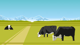 Farm cows Royalty Free Stock Image