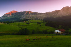 Farm with cows and sheep in Atxondo Royalty Free Stock Photos