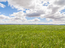 Farm, crop field. landscape with green grass. Spain agriculture. Royalty Free Stock Photos
