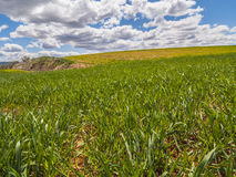 Farm, crop field. landscape with green grass. Spain agriculture. Stock Image