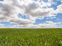 Farm, crop field. landscape with green grass. Spain agriculture. stock images