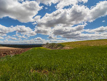 Farm, crop field. landscape with green grass. Spain agriculture. Royalty Free Stock Photography