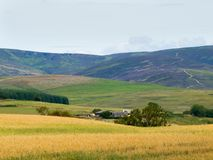 Farm and crops in Glen Clova royalty free stock image