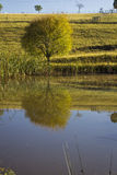 Farm dam with reflections of a single tree stock photo