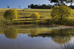 Farm dam with reflections and trees Royalty Free Stock Image