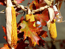 Farm decoration maize Royalty Free Stock Image