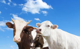 Farm der Tiere Lizenzfreies Stockbild