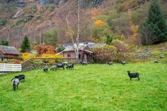 Farm der Tiere in Norwegen Stockfotografie