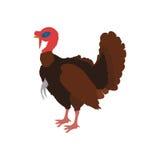 Farm- der Tierehaustiercharakterikone der Türkei Dekorativer Hintergrund als stilisiert Strudel der Wellen Lizenzfreie Stockfotos