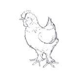 Farm- der Tiereikone der Hühnerskizze Dekorativer Hintergrund als stilisiert Strudel der Wellen Stockfotos