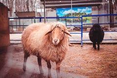 Farm- der Tierenagetierhaus des Tieres Stockbilder